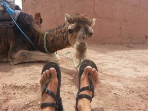 27 camel likes lunas