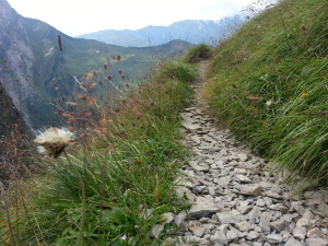 31 swiss single trail
