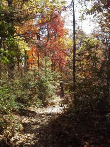 A Run in the Woods: How I Came to Be a Trail Runner – by Julie Blanda
