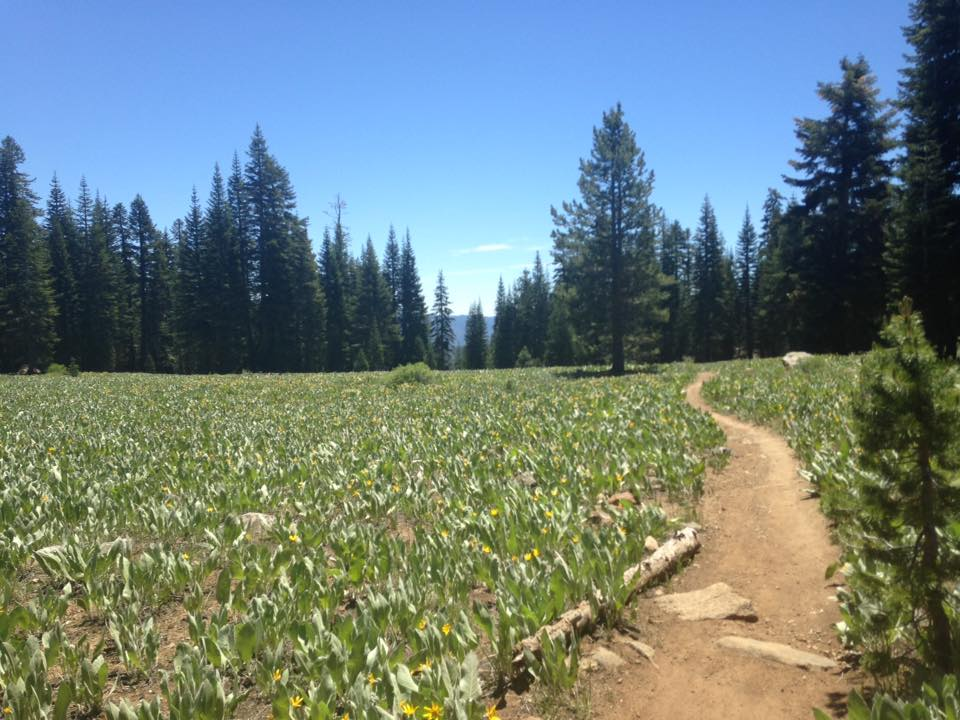 Tahoe Rim Trail - John McGraw