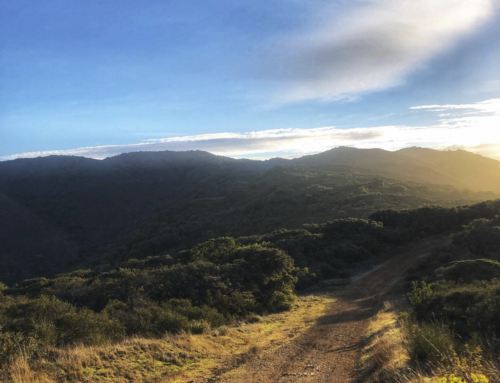 DBR Trail Guide: The Best of the Bay